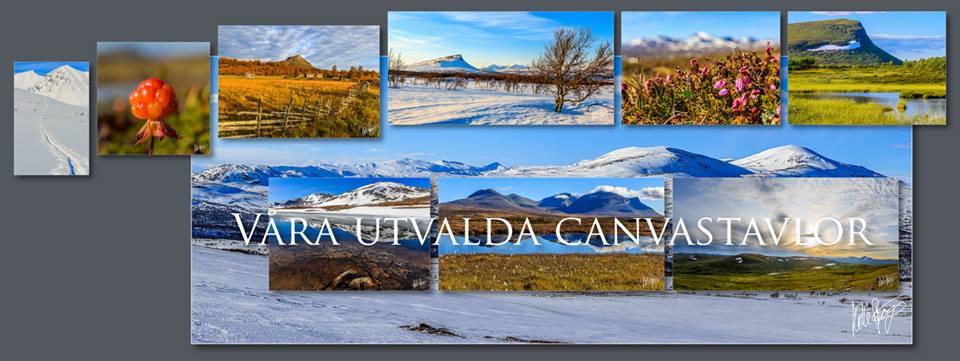 Skarefjäll Natur och Foto